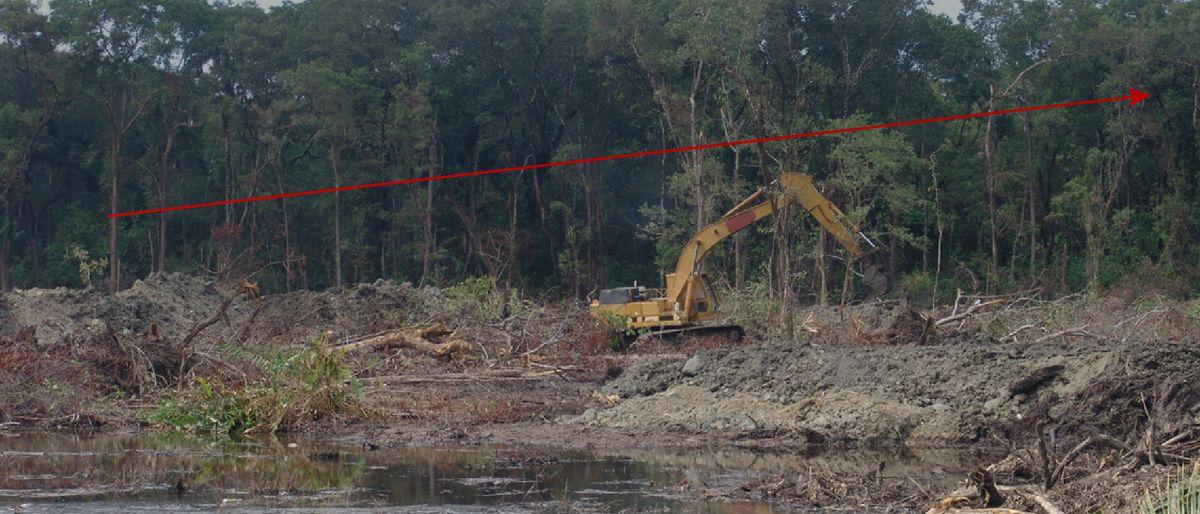 woodworking machine in process of deforestation