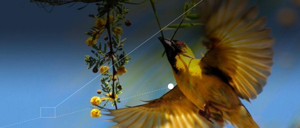 photo of a bird in flight holding a stalk in its beak